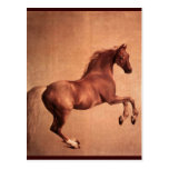 RED HORSE POSTCARD