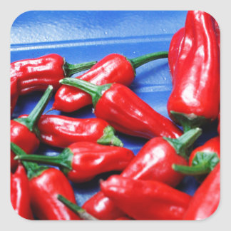 Red hot and blue: chilli peppers square sticker