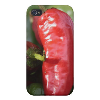 Red Hot Chili Pepper Case iPhone 4 Cases