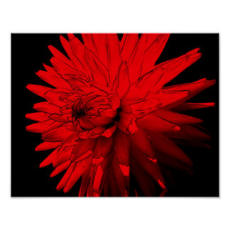 Red Hot Dahlia Flower Poster
