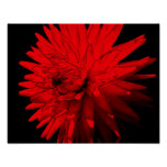 Red Hot Dahlia Flower Print