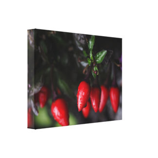 Red Hot Garden Salsa Chili Peppers. Canvas Print