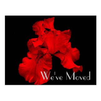 Red Hot Iris New Address Floral Art Postcard