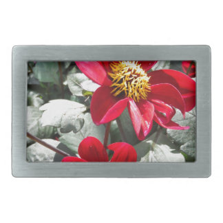red hot pink daisy / daisies flowers belt buckles