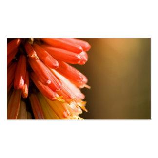 Red Hot Poker flower Business Card Template