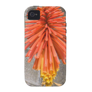 Red Hot Poker Flower iPhone 4 Case Mate