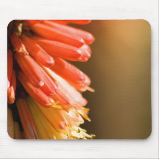 Red Hot Poker flower Mouse Pads