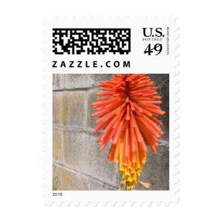 Red Hot Poker Flower Postage Stamp