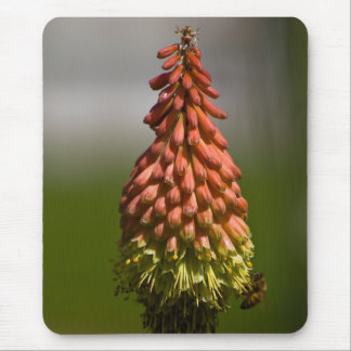 Red Hot Poker Mouse Pad