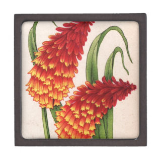 red-hot pokers kniphofia flowers gift box