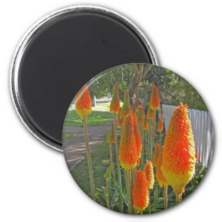 red hot pokers magnets