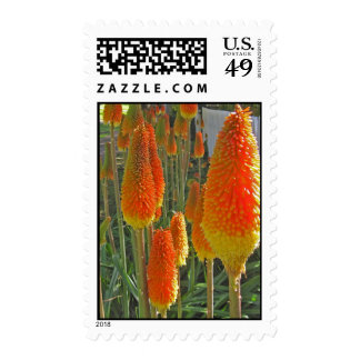 red hot pokers postage stamps