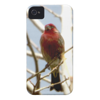 Red House Finch Sitting on Branch in Winter iPhone 4 Cover