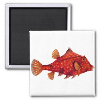 Red Humpback Turretfish 2 Inch Square Magnet