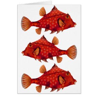 Red Humpback Turretfish Card