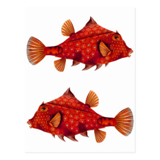 Red Humpback Turretfish Post Card