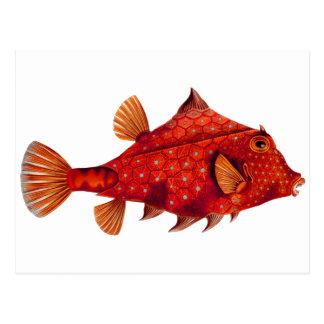Red Humpback Turretfish Postcard