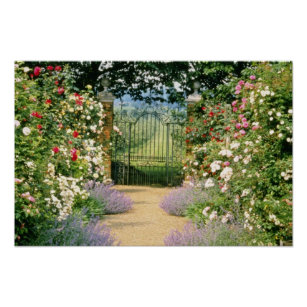 Red Hybrid Rose Lined Path To Gate, Underplanted W Poster