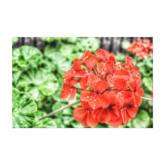 Red Hydrangea Canvas Print