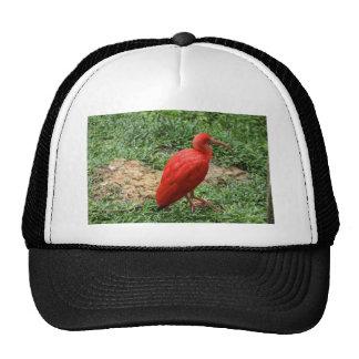 Red Ibis Trucker Hat