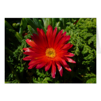 Red Ice Flower Colorful Carpet Plant Card