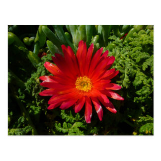Red Ice Flower Colorful Carpet Plant Postcard