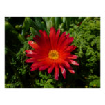 Red Ice Flower Colorful Carpet Plant Poster