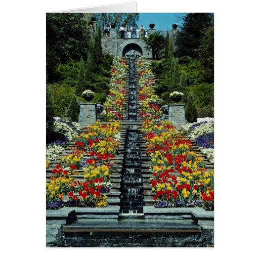 Red In the park, Mainau flowers Cards