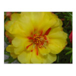 RED IN YELLOW MOSS ROSE postcard