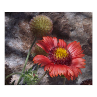 Red Indian Blanket Poster