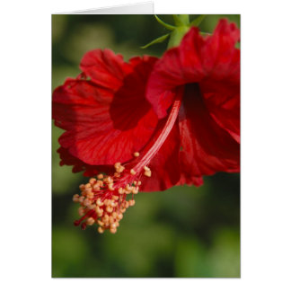 red indian hibiscus card