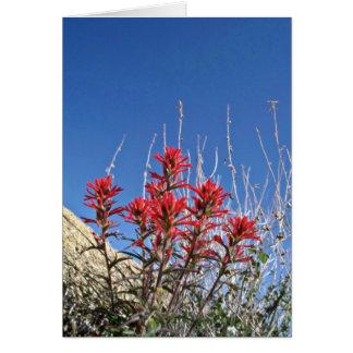 Red Indian Paintbrush Closeup flowers Greeting Card