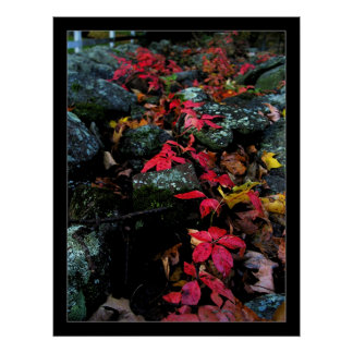 Red Ivy Posters