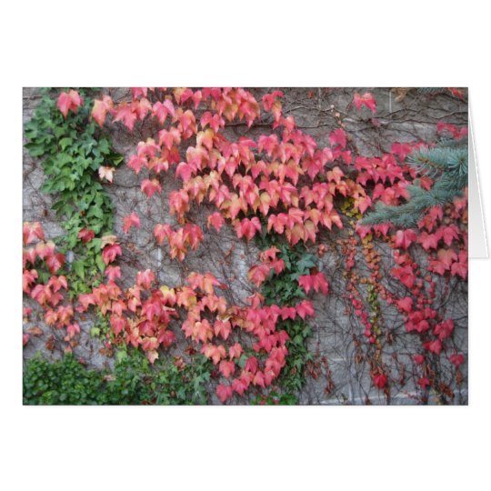 Red-Ivy Wall Notecard