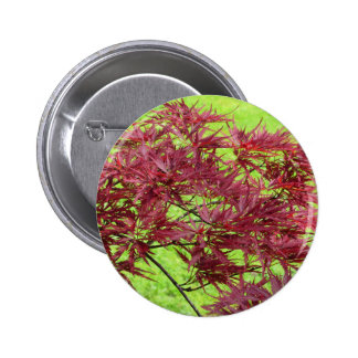 Red japanese maple leaves on green background pinback button