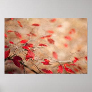 Red Jewled Bush Poster