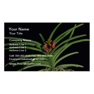 Red Joanna Ono Ascocenda flowers Business Card Template