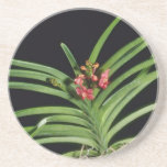 Red Joanna Ono (Ascocenda) flowers Beverage Coaster