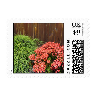 Red Kalanchoe Flowers Postage