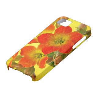 Red Kalanchoe - Succulent Sunshine iPhone SE/5/5s Case