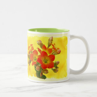 Red Kalanchoe - Succulent Sunshine Coffee Mug
