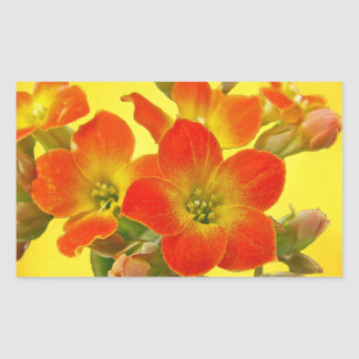Red Kalanchoe - Succulent Sunshine Rectangular Sticker
