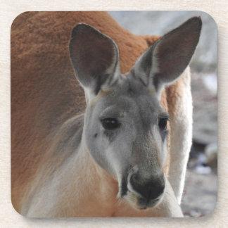 Red Kangaroo Coasters