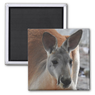 Red Kangaroo Magnet