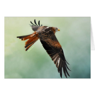 Red Kite in Flight Stationery Note Card