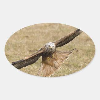 Red Kite (Milvus Milvus) Oval Sticker