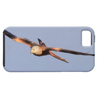 Red Kite Raptor iPhone SE/5/5s Case