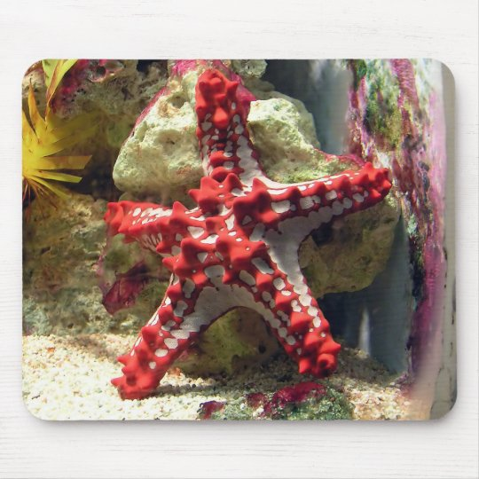 Red Knobbed Starfish - Incredible Shot Mouse Pad