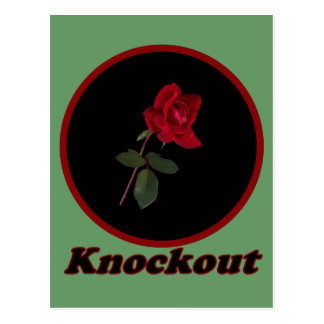 Red Knockout Rose Post Cards
