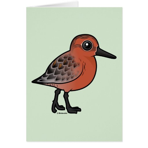 Red Knot Card
